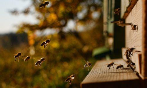 Parrainer une ruche, la solution ultime face au déclin des abeilles