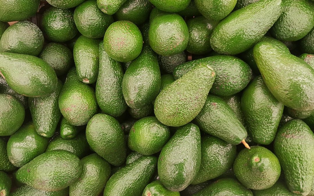 Faire pousser un avocat : Le guide facile