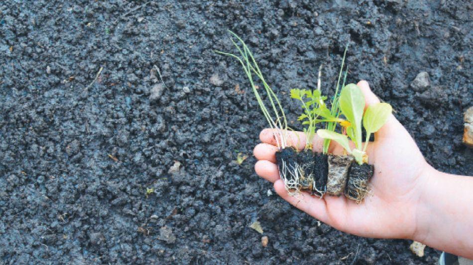 L'agriculture biologique et écologique